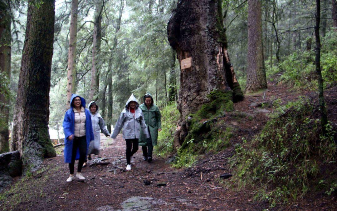 Inicia avistamiento de luciérnagas en Tlaxcala