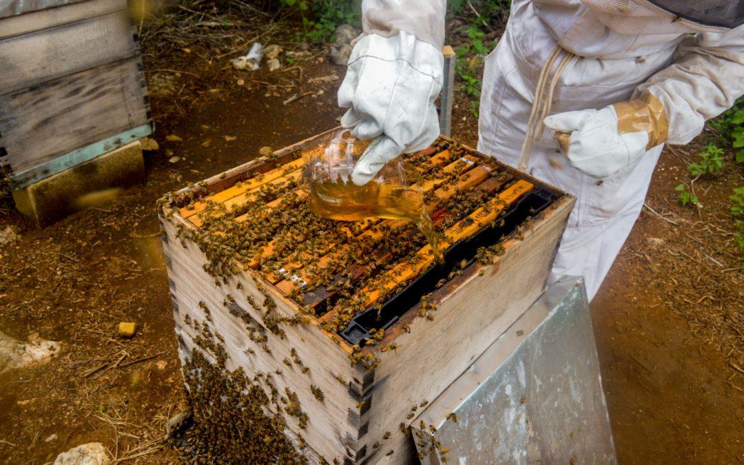 Desarrollan suplementos alimenticios para abejas