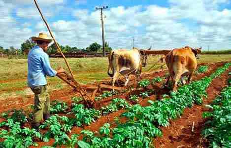 Norteamérica, clave para productos agrícolas mexicanos