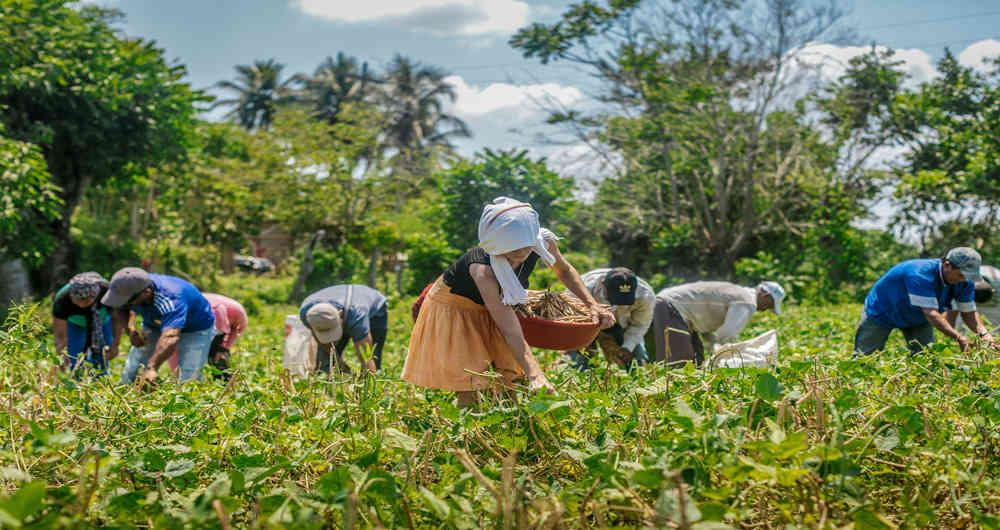 Cierra balanza agroalimentaria con nueve mil mdd de superávit en 2019