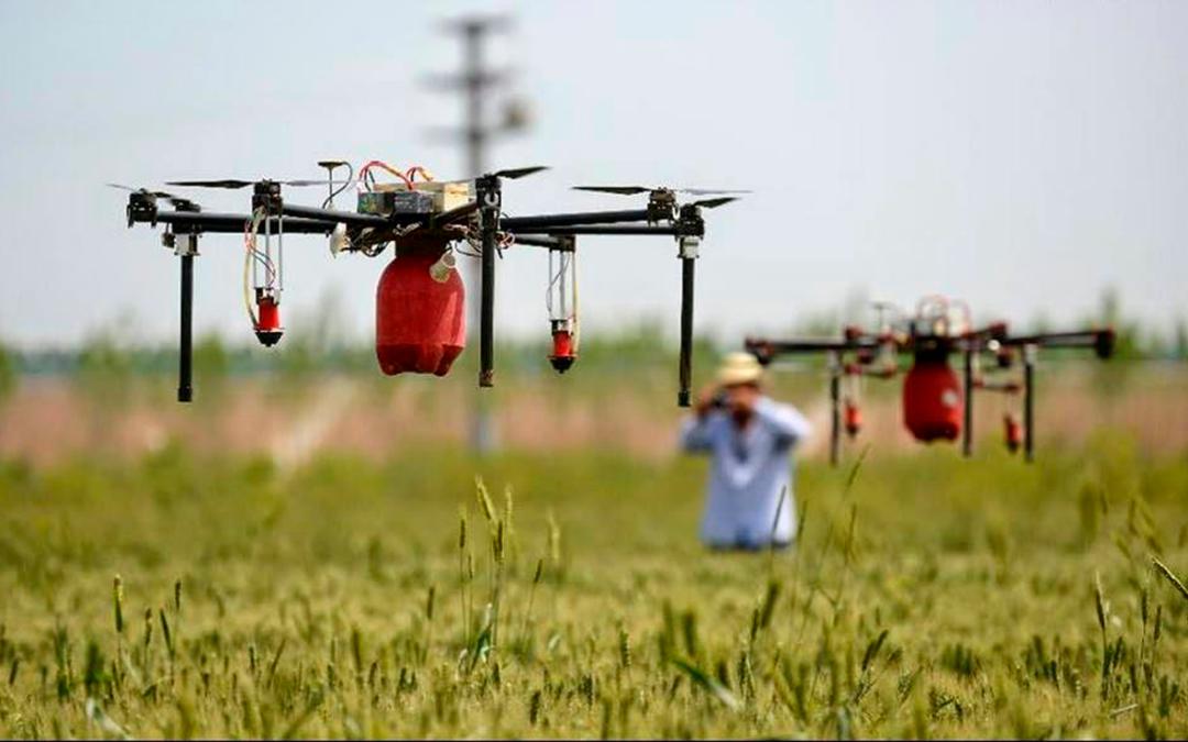 Analizan uso de drones para control de plagas