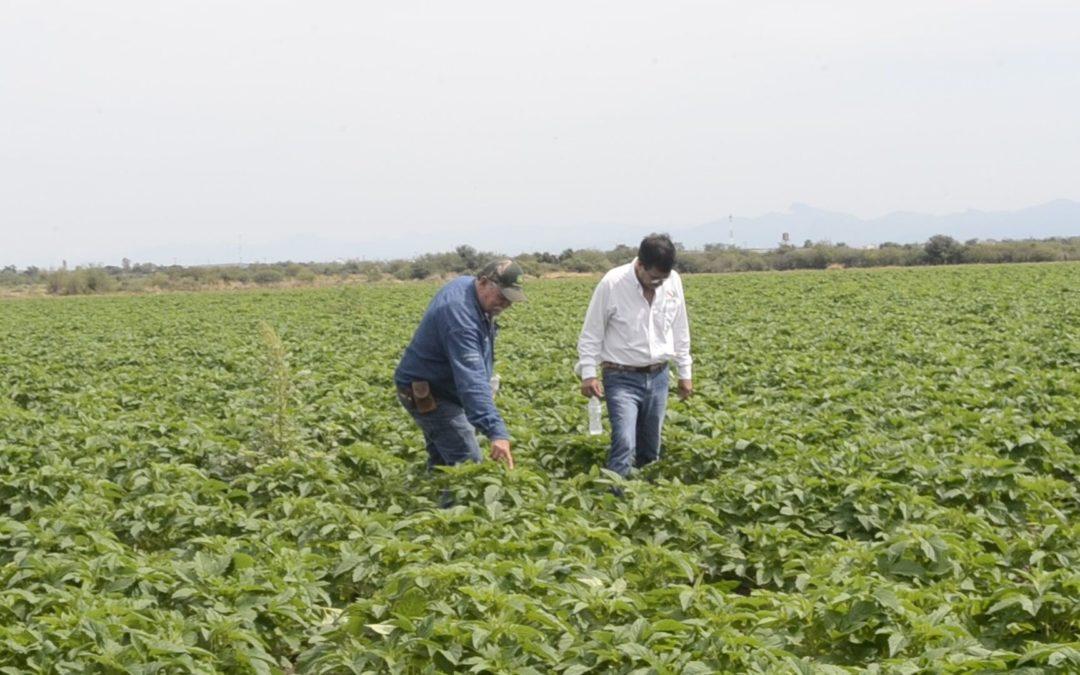Lanza Agricultura Proyecto Nacional de Plantas Nativas
