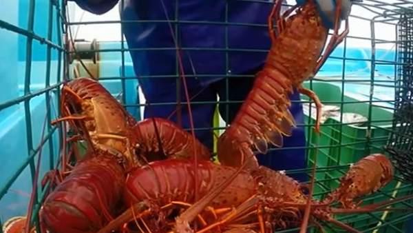 Conapesca logran 1.6 toneladas de productos por pesca furtiva
