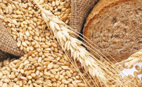 Crecerá 10 por ciento producción de trigo en Sonora
