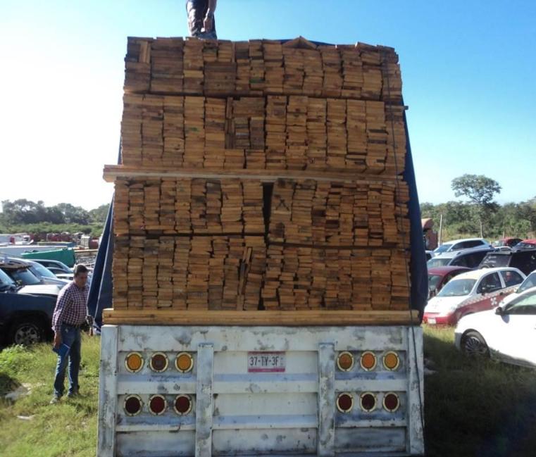Asegura Profepa 87.8 metros cúbicos de madera en Campeche