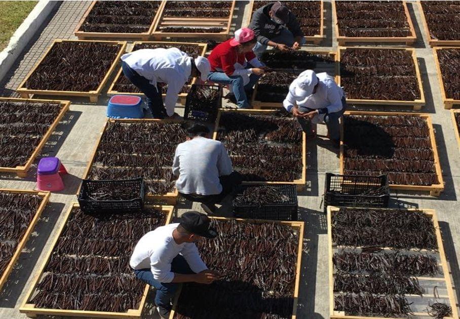 Agricultura y cadenas productivas aseguran producción y abasto de alimentos