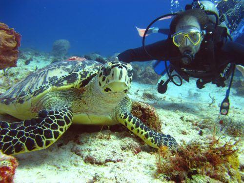 Turistas ya pueden disfrutar de más de 30 sitios de buceo en Cozumel
