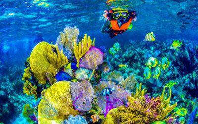 Quintana Roo, pionero mundial en siembra de corales