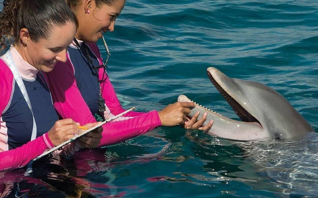 Se suma The Dolphin Company a iniciativa de Cancún: Women in Global Travel del WTTC